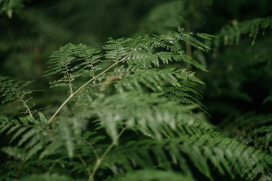 Magda i Mateusz | Sesja Ślubna w Lesie 4